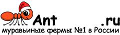 Муравьиные фермы AntFarms.ru - Воронеж